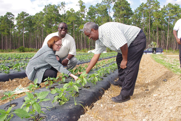 agriculture in the bahamas News and press release from government of the bahamas, published  said at  the bahamas national agriculture, agribusiness and marine.